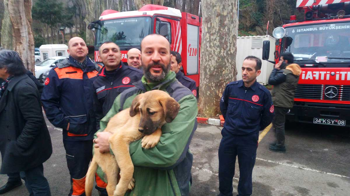 Puppy Beykoz Well Rescue